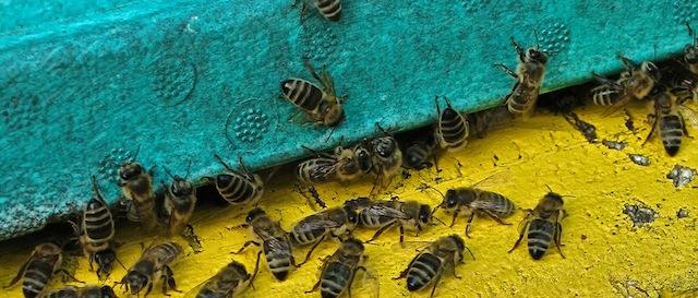 Bienen, Foto Foodhunter (1)