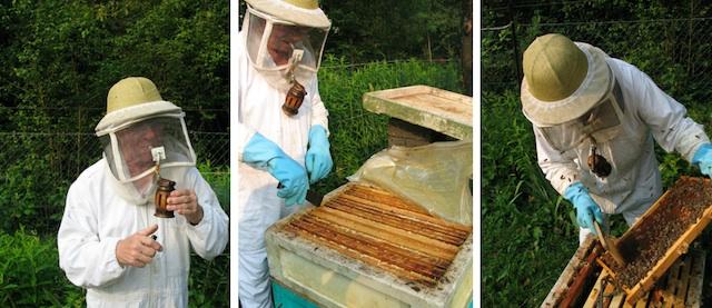 Bienen, Foto Foodhunter, Sabine Ruhland