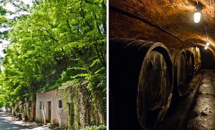 Weinviertel. Kellergassen, Wein und Feste.