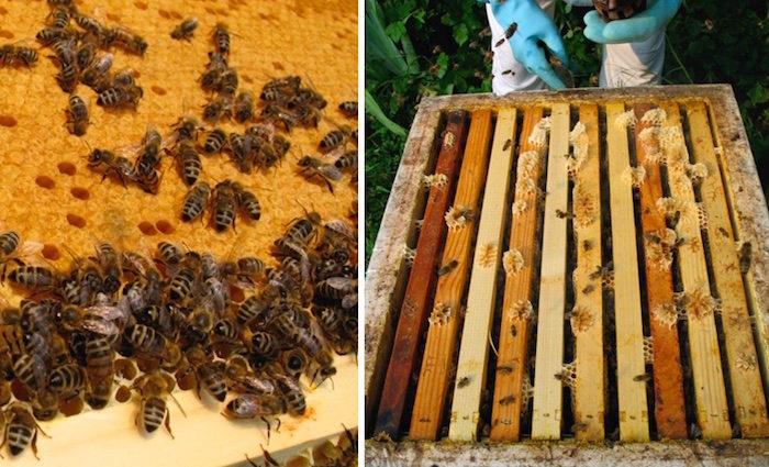 Honig aus dem Englischen Garten