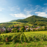 Die Pfalz. Erleben Sie ein besonderes Lebensgefühl