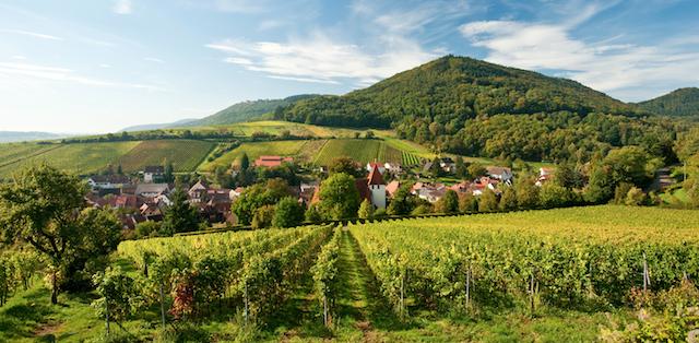 Foto Pfalz-Tourismus