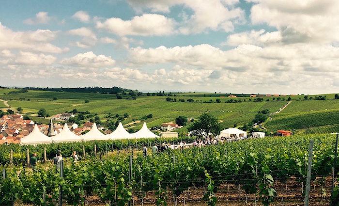 Pfalz genießen. Insider-Tipps