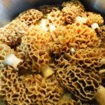 Frische Morcheln – Delikatesse für kurze Zeit