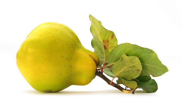 Apfel oder Birne? Nichts da, ich bin eine Quitte