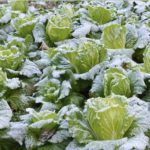 """Wintergemüse. Knallbunt und voller Vitamine: unsere """"Eisheiligen"""""""