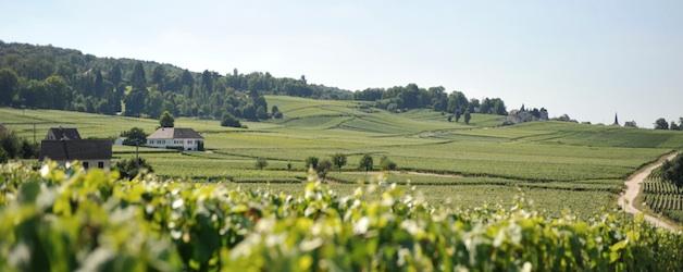 Champagne. Landschaft. Foto Foodhunter