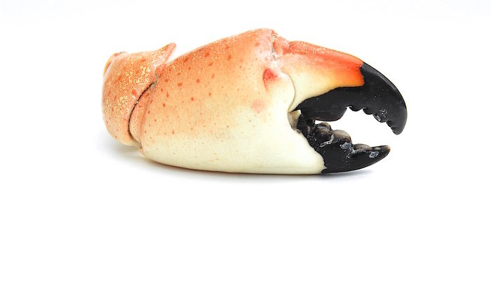 Crusher Claw – Spiny Lobster und die Florida Stone Crab