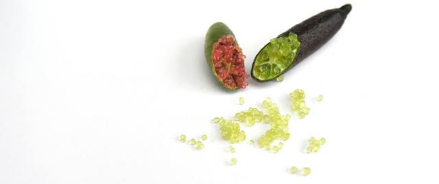 Fingerlimes, Foto Foodhunter (1)