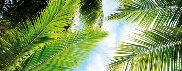 Kokosblütenzucker. Die Krönung des Palmzuckers