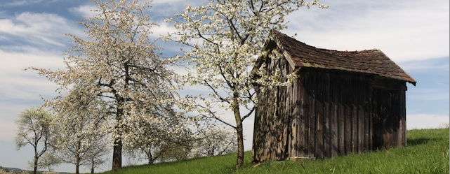Die Fränkische Schweiz feiert die Kirschblüte