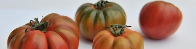 Tomaten, Foto Foodhunter, Sabine Ruhland