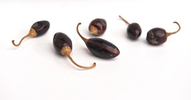 Catarina Chili – milder Chili mit Raucharoma