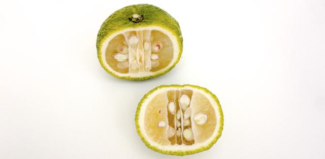 Mandarine, Grapefruit, Limette? Nichts davon. Mein Name ist Yuzu