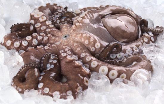 8 Arme und ein schlauer Kopf. Foodhunter auf Oktopus-Fang