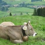 Wandern auf die Alm. Sennalpe Alpe Ornach, Allgäu