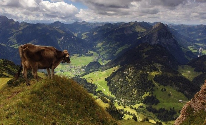 Gourmet Festival im Bregenzerwald