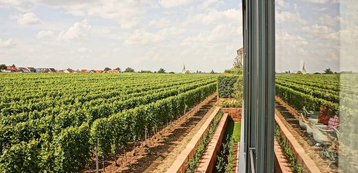 Weingut Markus Schneider, Suedpfalz Ellerstadt, foodhunter