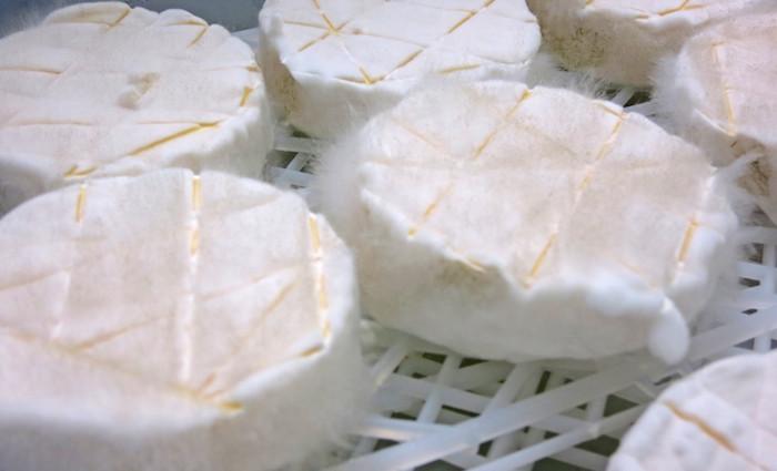 wildes cheese – passt auf keine Kuhhaut!