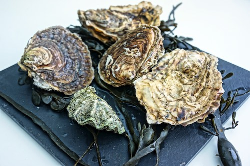 Austern, Algen
