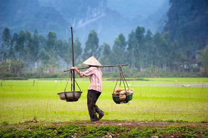 Tam Coc. Organic farming in Asia