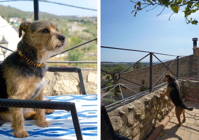 Hundehotel im Urlaub
