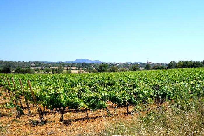 Son Campener Mallorca, Wein Mallorca