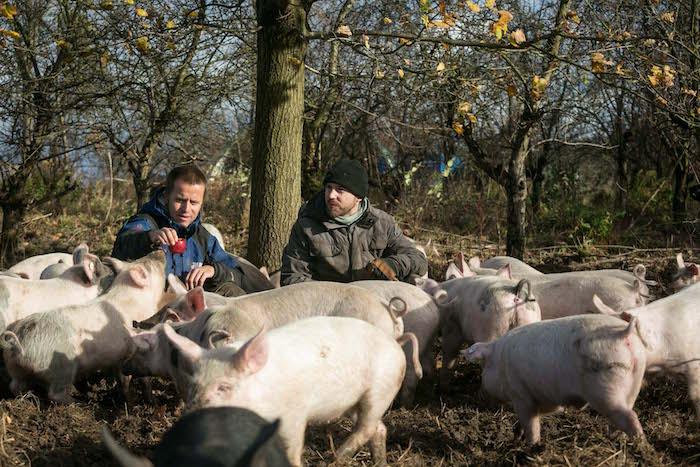 Grube / Land Brandenburg 18.11.2015 FOTO : YORCK MAECKE Fotoreportage im Sauen Hain von Clemens Stromayer und Axel Penndorf bei Freilegenden Schweinen .
