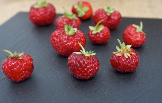 Sommerliebe: Mieze Schindler Erdbeere