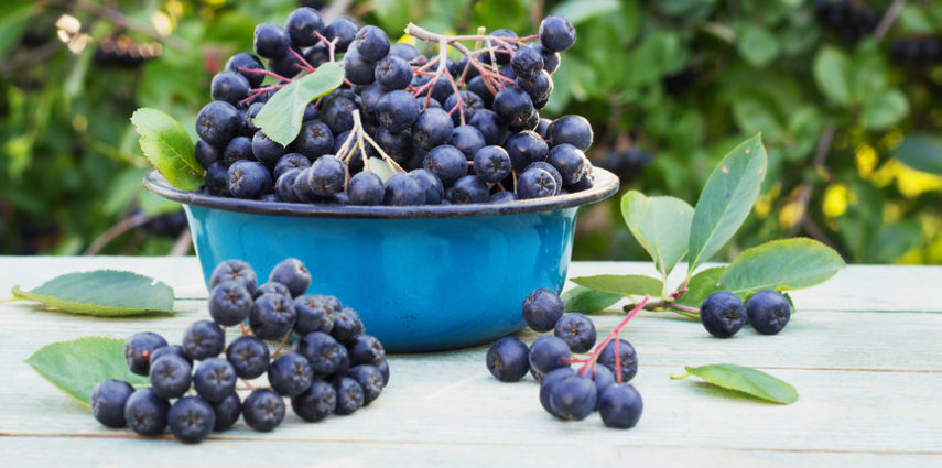 ARONIA. Beerenstarkes Superfood!