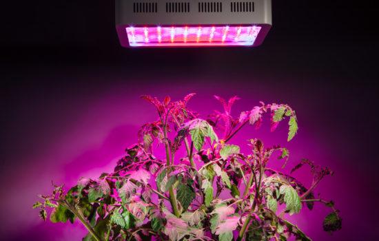 Ackern im Restaurant – das LED Gartenbeet