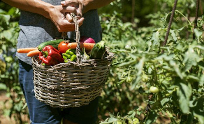 Kleinbauern vs. industrielle Landwirtschaft