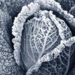 Wintergemüse - Reifezeit ist, was Köche daraus machen