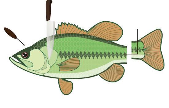 Ikejime - gereifter Fisch braucht die richtige Vorbereitung