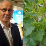 """Interview mit Geldermann """"Chef de Cave"""" Marc Gauchey"""